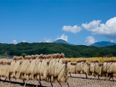 日本では寒い地方で作られる米の画像