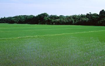 片山糧穀株式会社